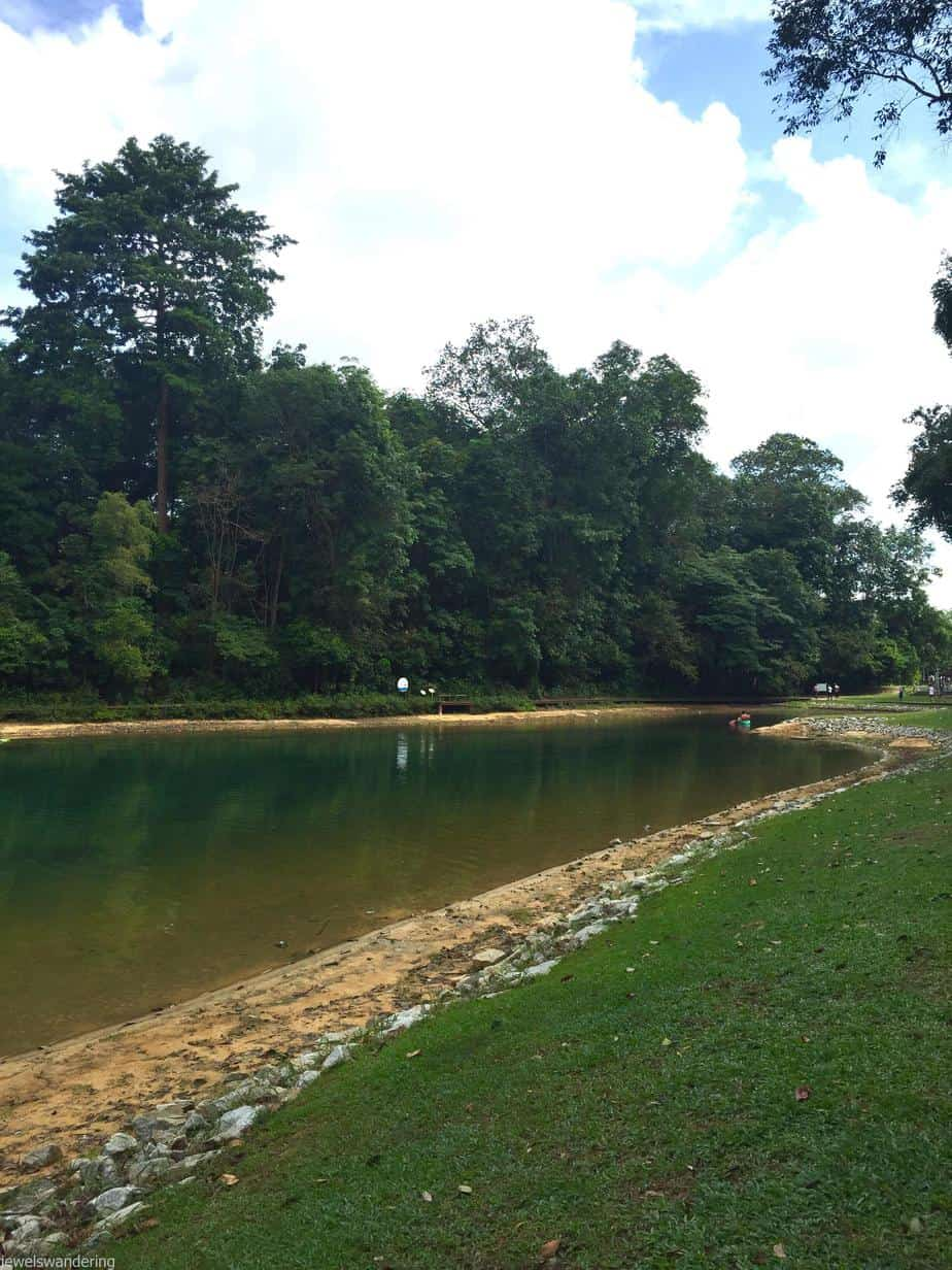 Explore Singapore: Macritchie Reservoir