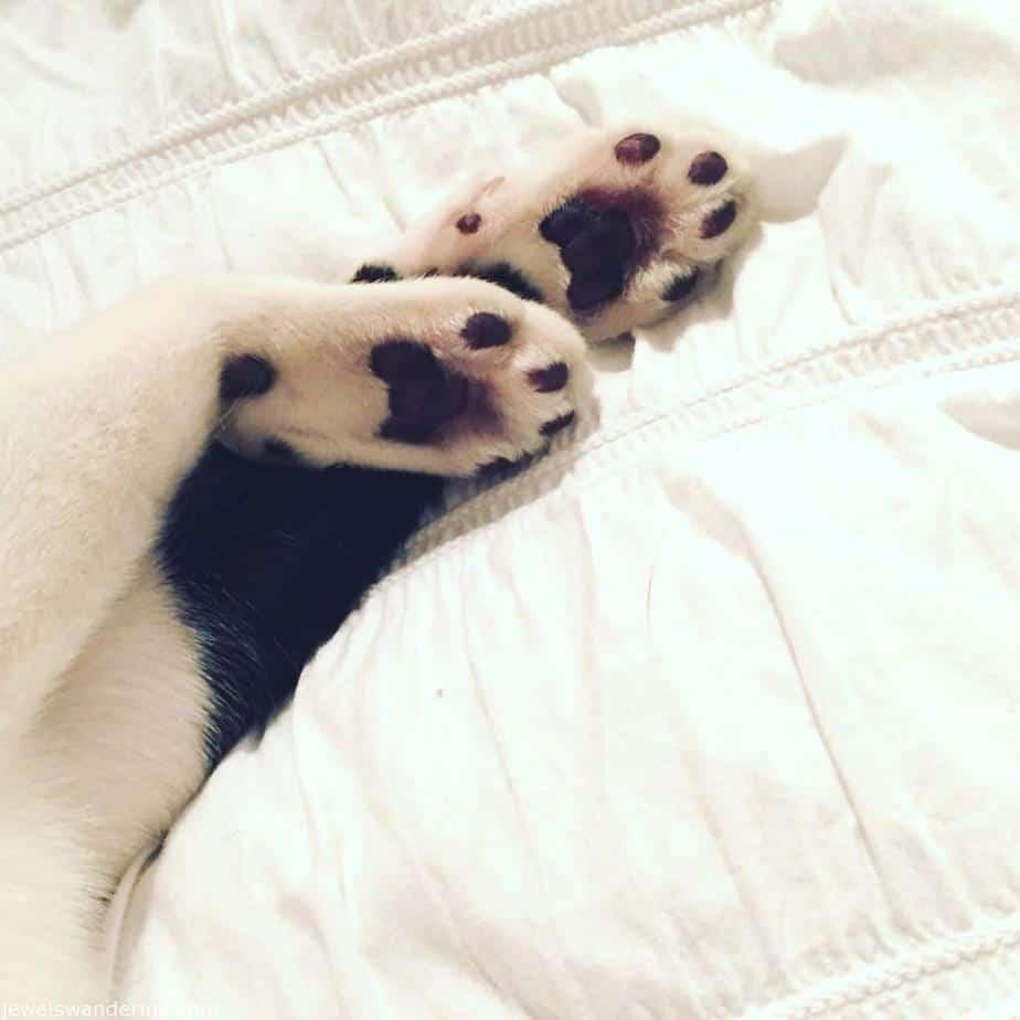 George the Dog Cat