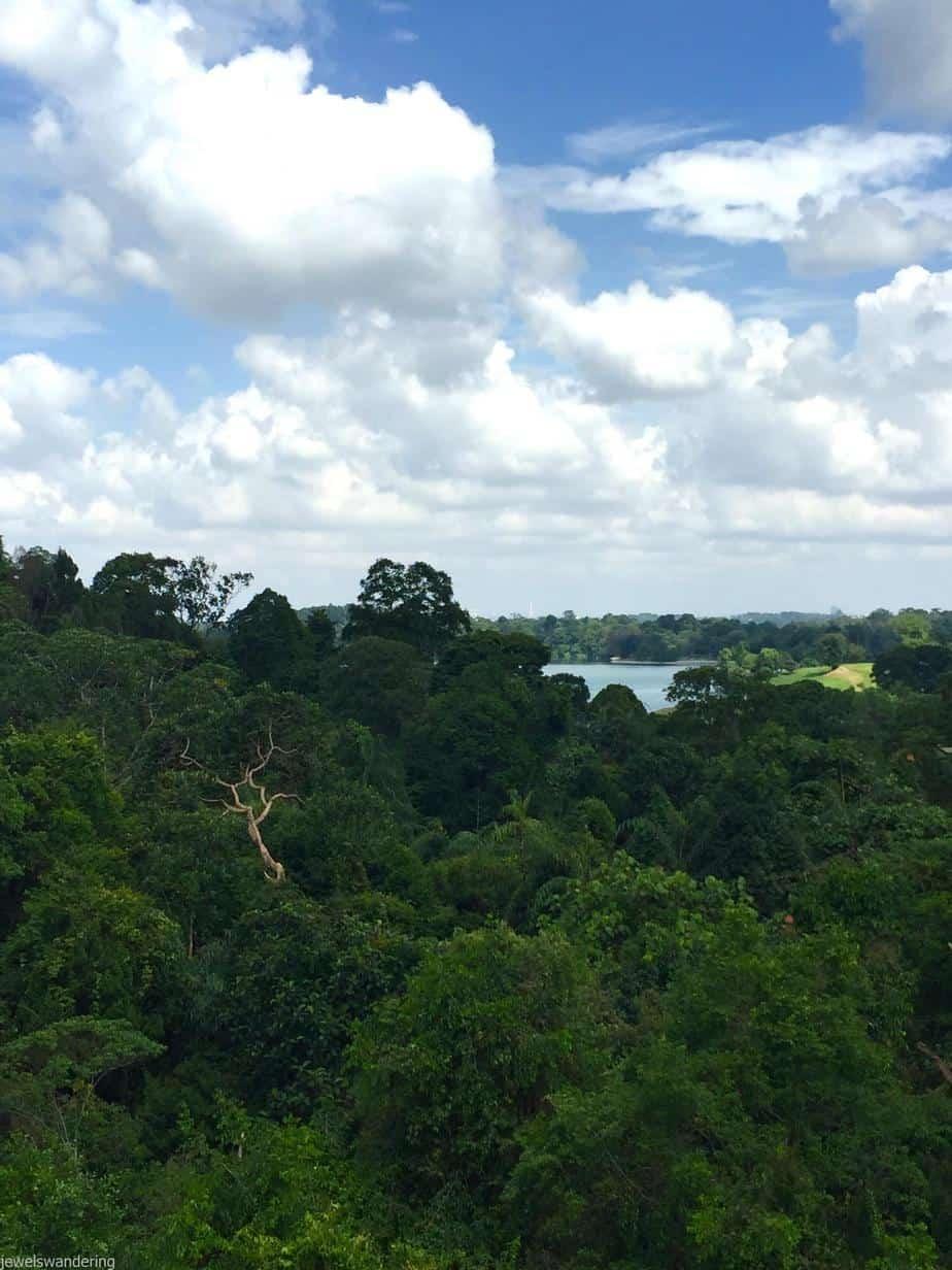Macritchie Reservoir, Singapore