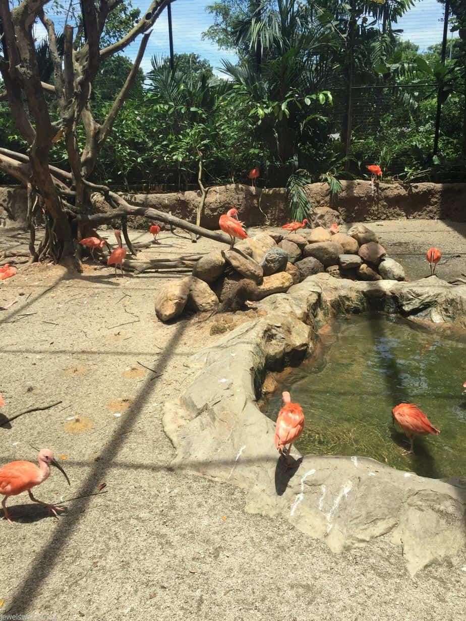 Jurong Bird Park