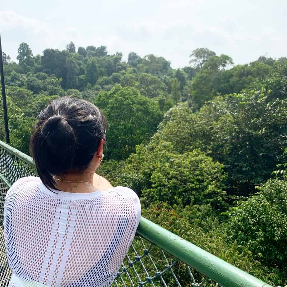 MacRitchie Reservoir, Treetop Walk