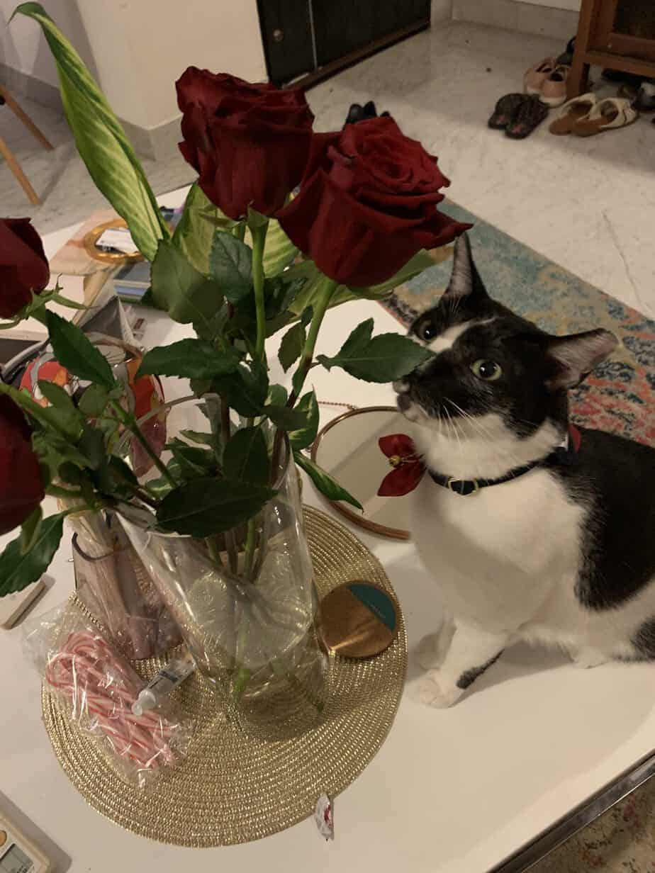 Valentines' Day, Roses, George