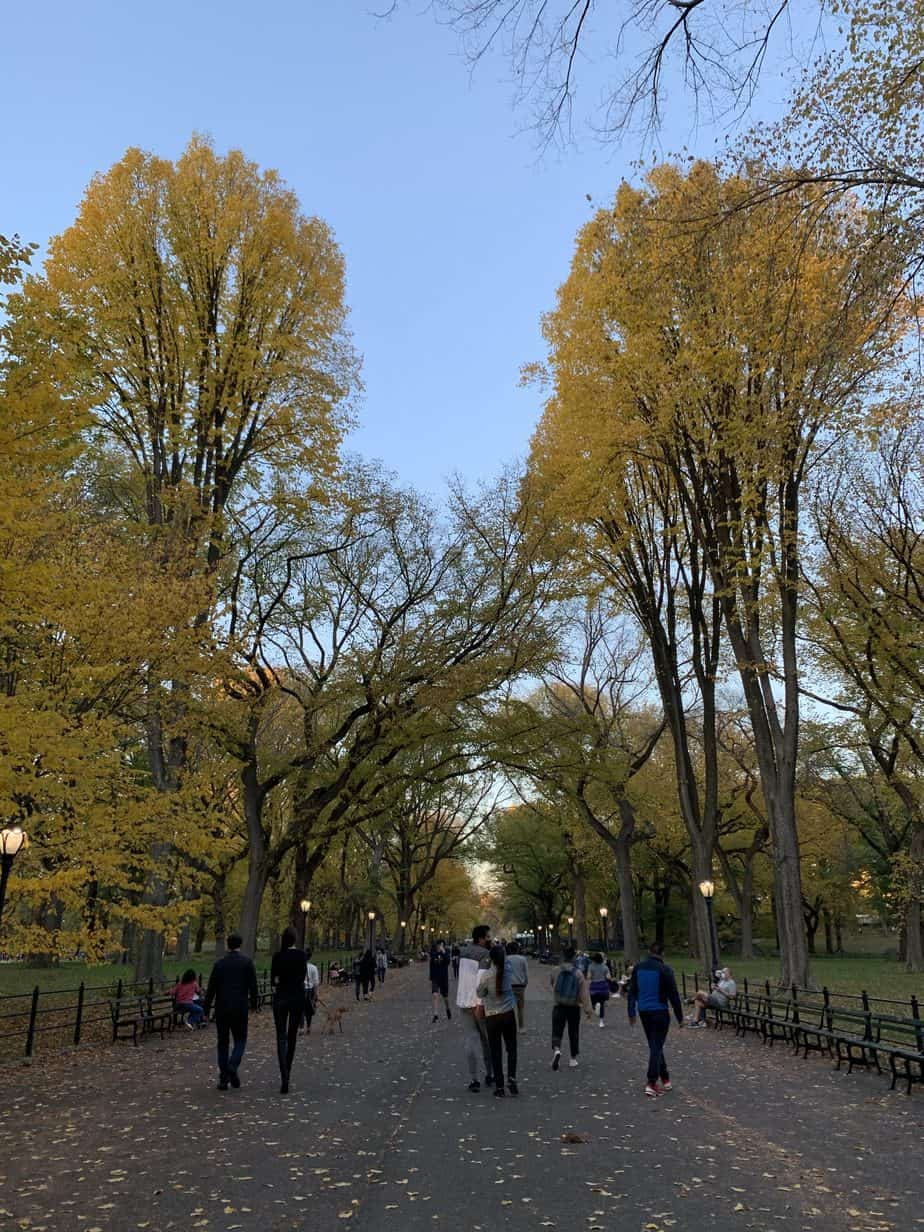 Fall trees in Central Park